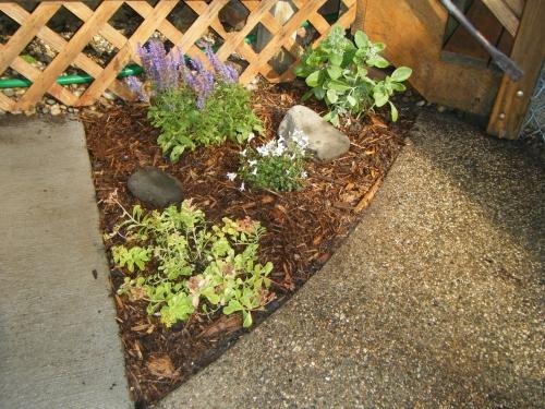 mini flower garden