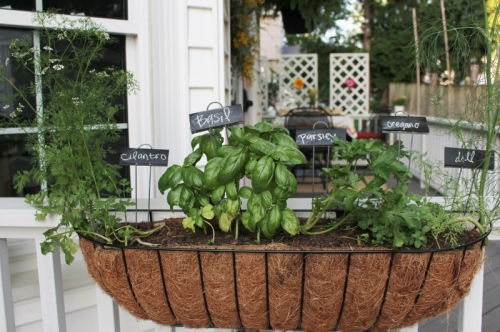 deck planter - herb garden